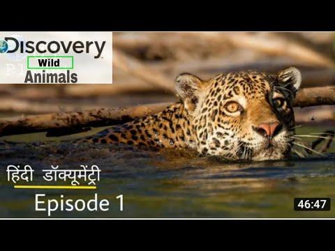 Africa wild Rhino Elephant Baffalo Documentary in Hindi (Ful