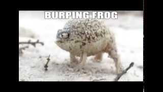Burping Frog