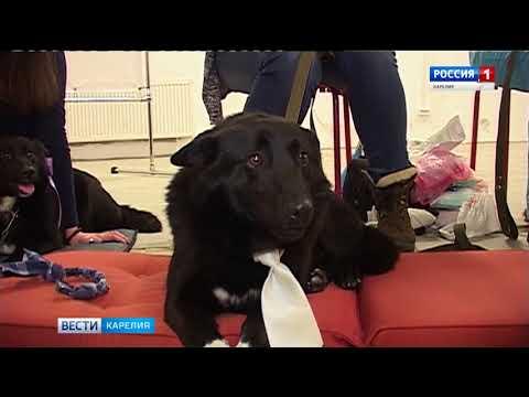 Бездомные животные ждут хозяев на выставке-раздаче в Петрозаводске