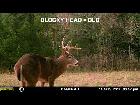 Moultrie: How to Age a Deer in Trail Camera Pictures