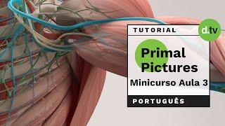 DOTLIB - Primal Pictures - Mini Curso (Aula 3)