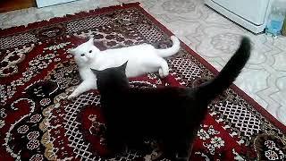 Реакция на голос кота