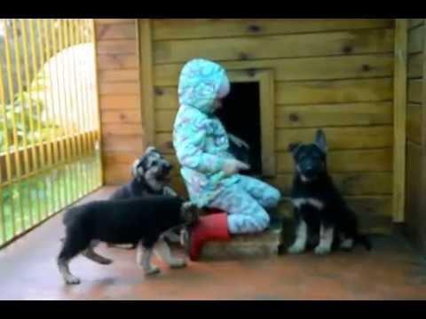 Породистые щенки и котята 101dog