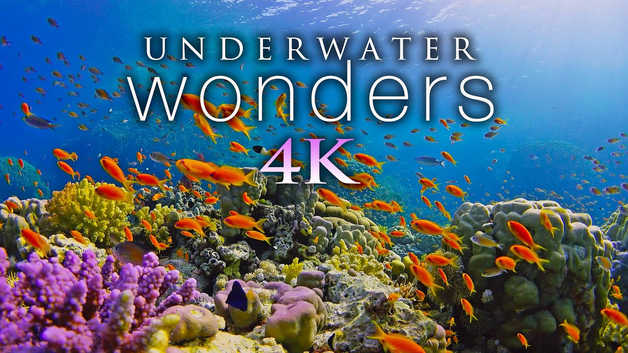 *NEW* 11 HOURS of 4K Underwater Wonders + Relaxing Music - Coral Reefs & Colorful Sea Life in UH