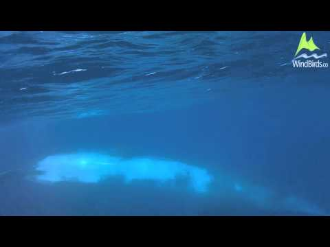 Swimming with a Bryde's Whale in Madeira, Portugal