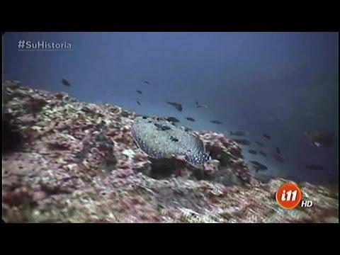 ¡En lo profundo: el pez lenguado!