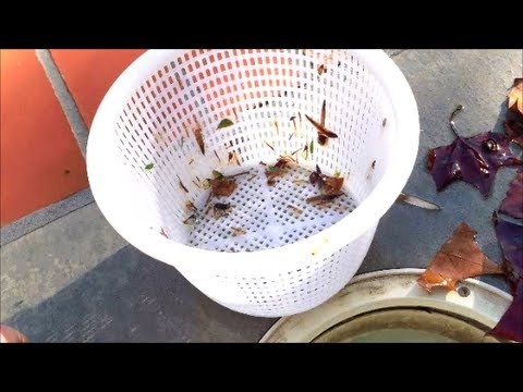 How to Clean Your Pool Skimmer Basket