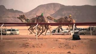 Camel Race - Wadi Rum, Jordan - HD