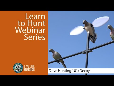 Download Dove Hunting 101: Decoys