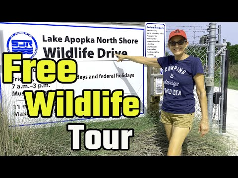 Lake Apopka North Shore Wildlife Drive & Loop Trail (RV Living Full Time) 4K Part 2