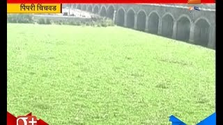 Pimpri Chinchwad : Lake Covered With Green As Lake Disappear