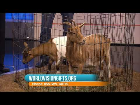 WCIU, The U | Give the gift of a goat