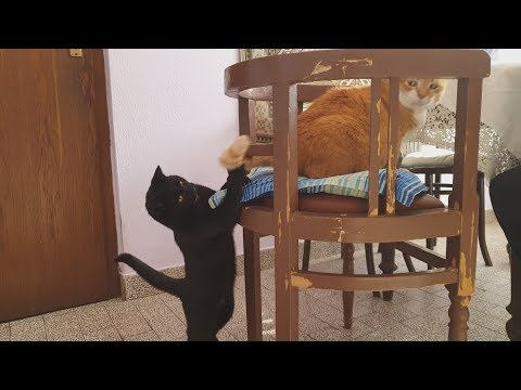 Kitten Playing With Cat's Tail