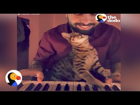 Guy Plays Piano For Rescue Cats | The Dodo