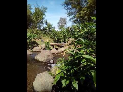Gunung Mas Tea Plantation-Bogor West Java,Indonesia