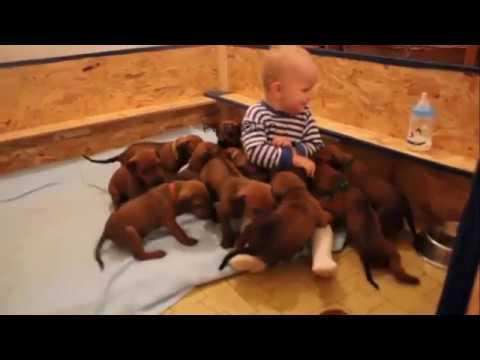 Vicious Puppies Attacks Human - Cute Video Compilation