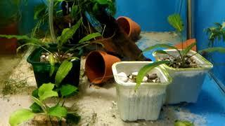 Ответы Петушки или дискусы, видовой аквариум или нерестовик, глина для удобрения растений аквариума