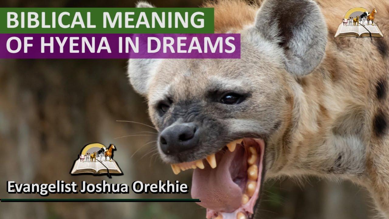 Biblical Meaning of HYENA in Dream -  Spiritual Meaning of Hyenas