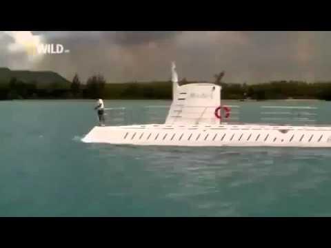 Amazing Creatures of The Deep Ocean - Wild Documentary