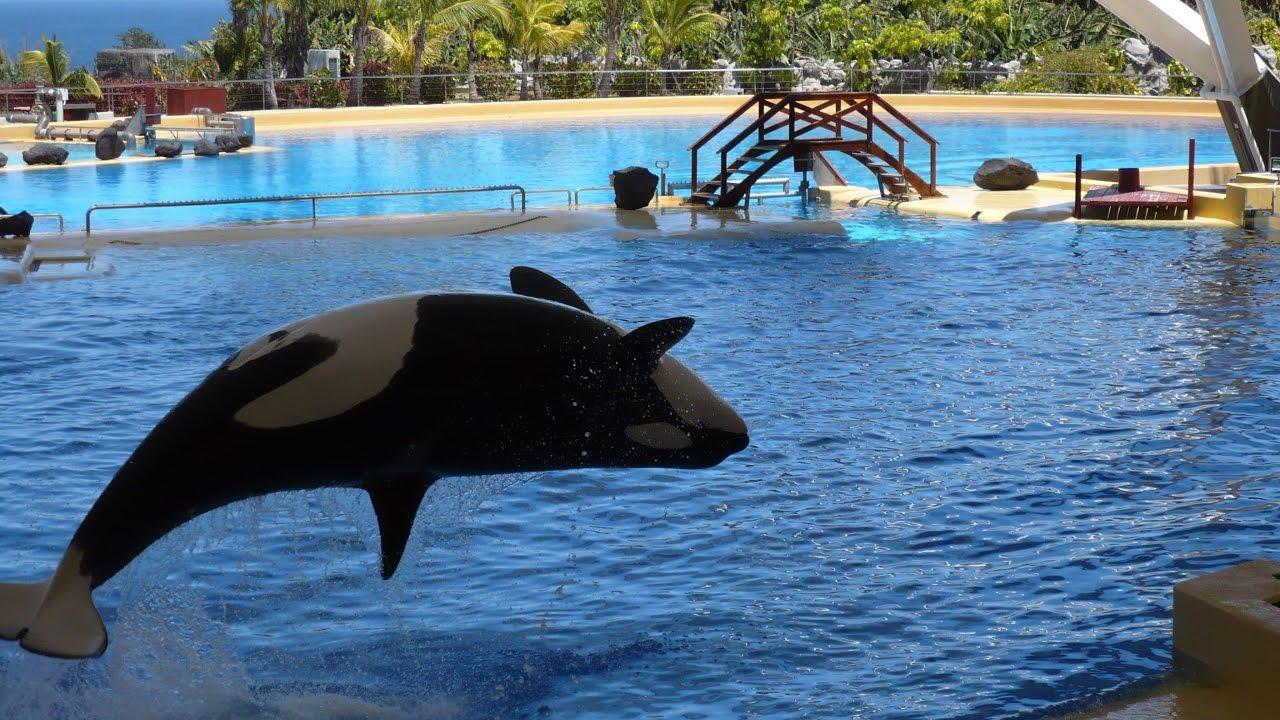 LORO PARQUE (PARK) Tenerife / HD / ORCA SHOW - YouTube