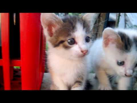 Gatti miao! My Favorite Cat Little Kitten - Funny Cats