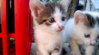 Video Gatti miao! My Favorite Cat Little Kitten - Funny Cats download MP3, 3GP, MP4, WEBM, AVI, FLV Oktober 2017