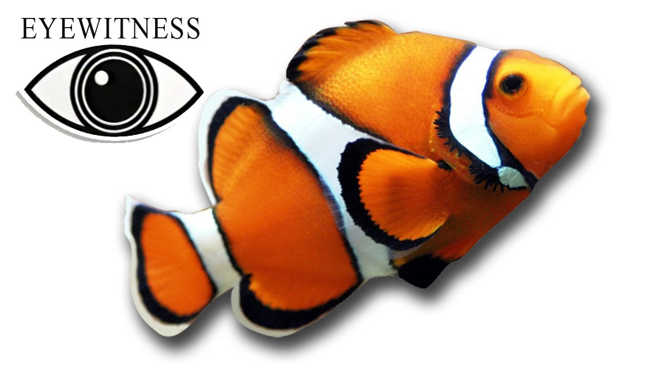 Eyewitness Fish S1e7 Youtube