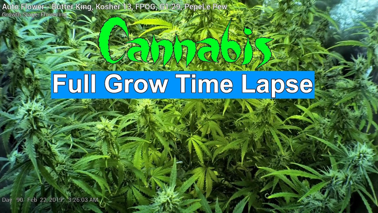 Time flowering cannabis