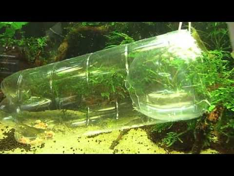 Diy aquarium how to make a fry trap for your aquarium for Aquarium fish trap