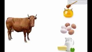 Урок 32 Природознавство 1 клас. Для чого потрібні свійські тварини?