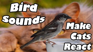 SOUNDS to MAKE CATS REACT Freak Out Hunting Mode Song Thrush Bird Really Works!! Call/Song/Sound