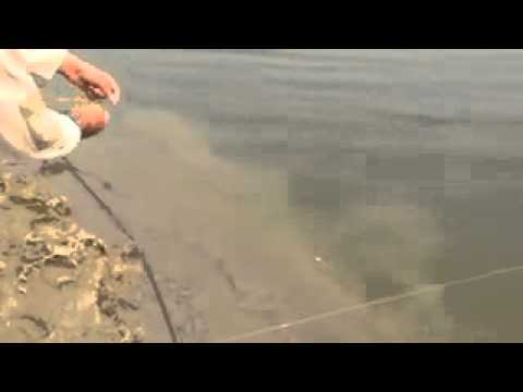 fishing in pakistan (burewala)