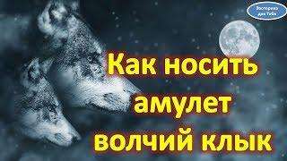 Как носить амулет волчий клык