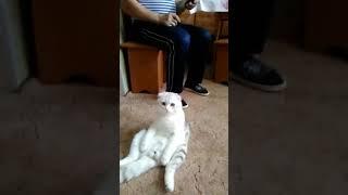 Кот прикольно сидит