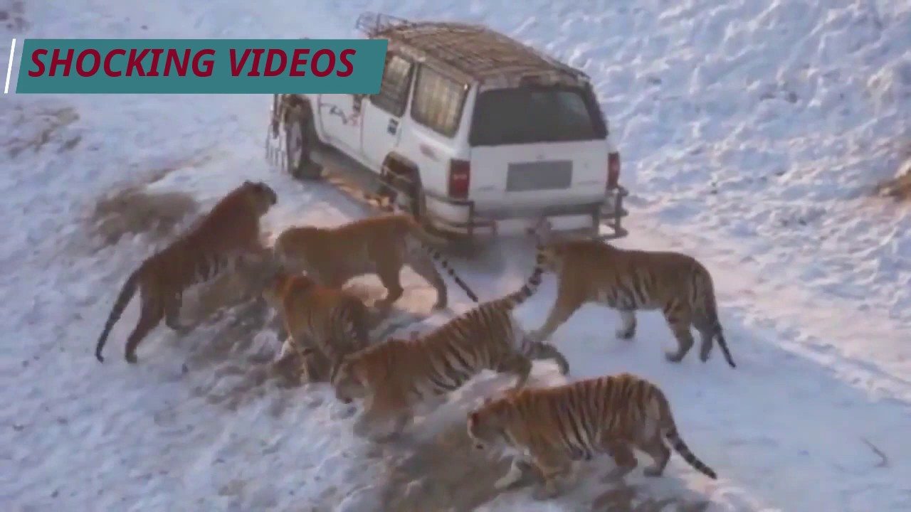 Amazing Wild Animals Attacks