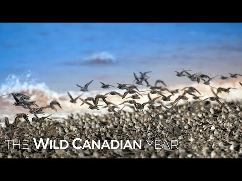 Eastern Canada's Bay Of Fundy Is Home To The World's Largest Tides | Wild Canadian Year
