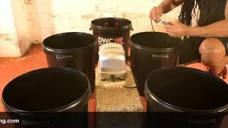 Basement Lighting DWCR PRO FLOW Hydroponics Bubble Pot System Set Up