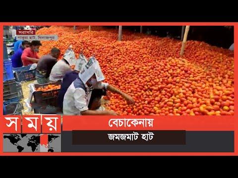 দিনাজপুরে টমেটো আবাদে ঝুঁকছেন চাষিরা | Tomato Cultivation | Business News | Somoy TV