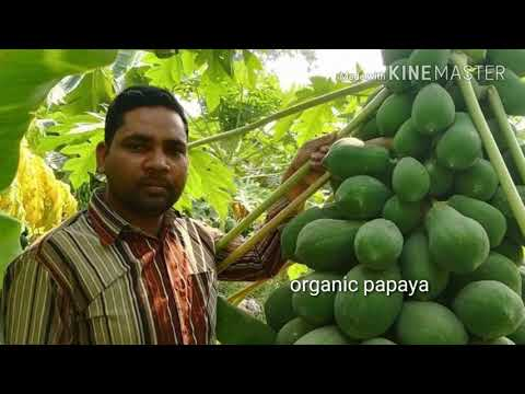 Save eco organic PVT LTD