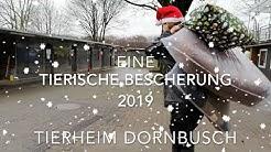 Tierheim Dornbusch - Eine tierische Bescherung - 2019