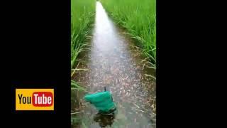 Phát hiện hồ cá cảnh 1 trăm triệu con lớn nhất Thái lan