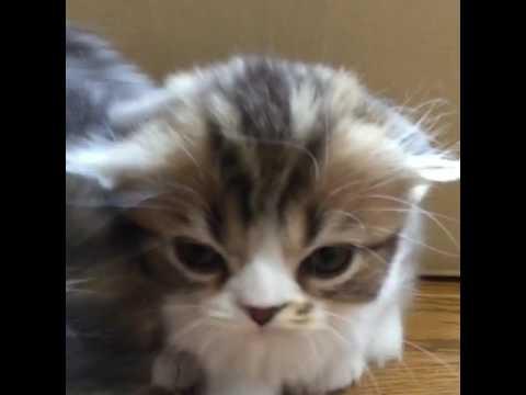 The box of never ending kittens