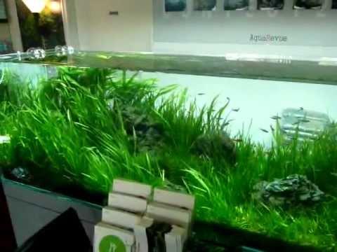 Aqua Revue,Nature Aquarium Shop, Japan.avi