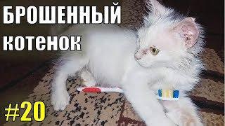 Брошенный котенок #20 Продолжение... Брошенный котик