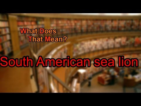 What does South American sea lion mean?