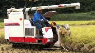 農事組合法人石黒 稲刈り風景