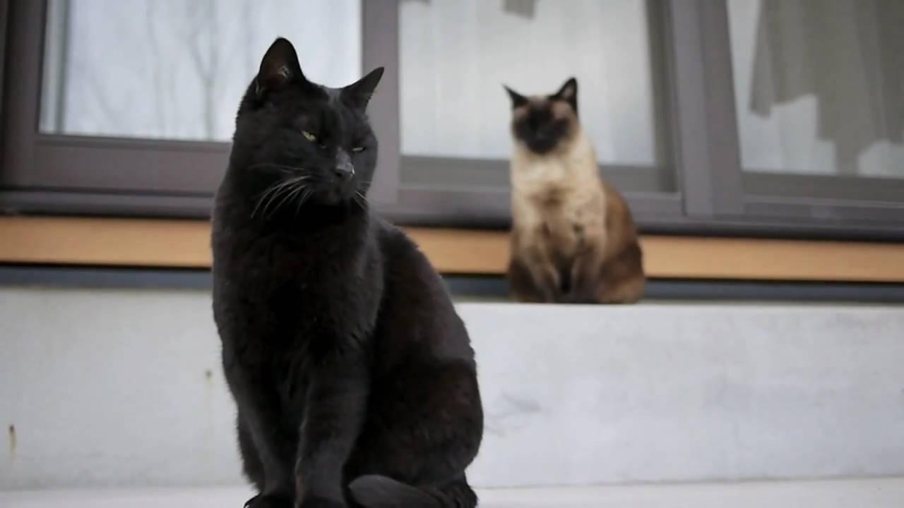 When Black Cat Has All Black Kittens