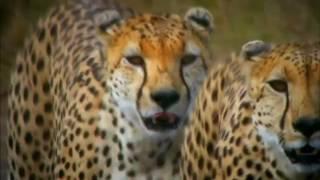 Восстание животных: Триумф позвоночных | Трейлер | 2013