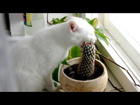 Funny ANIMALS TRYING TO LICK EVERYTHING while YOU'RE TRYING NOT TO LAUGH - Funny videos