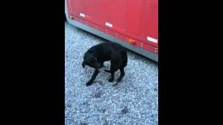 Бешеная собака кусает свой хвост
